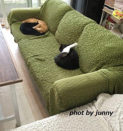 ソファに座った猫ちゃん3匹